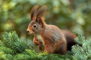 squirrel-619968_1280